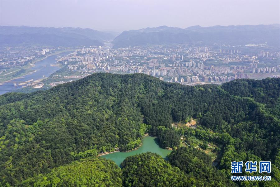 重庆缙云山:绿意盎然生态美